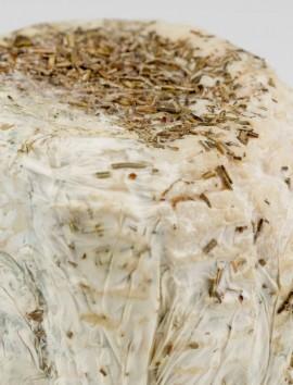 Queso de Cabra Semicurado con Romero de Benabarre